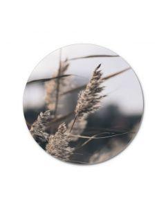MELLOW GRASSES 3