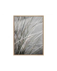MELLOW GRASSES 1